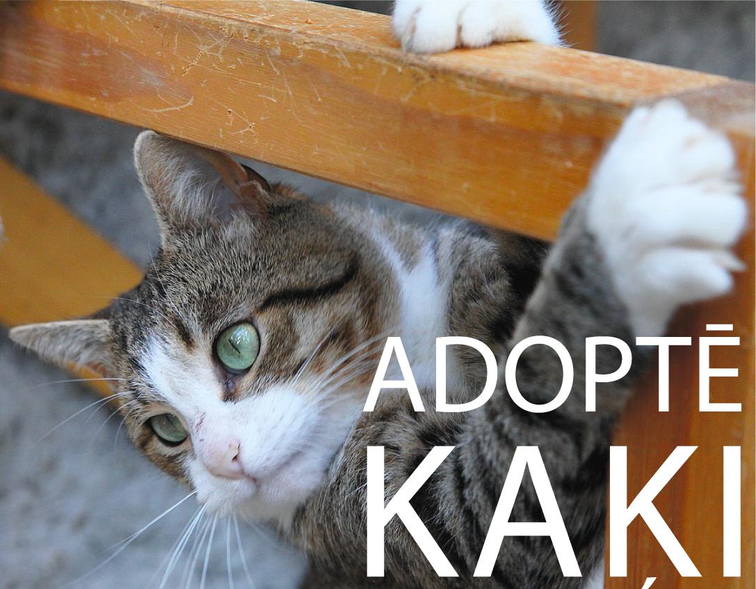 adopte-kaki