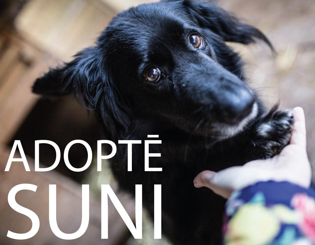 adopte-suni