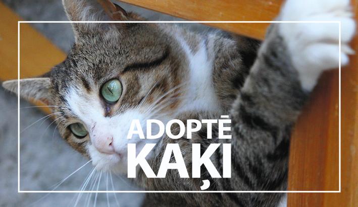 adopte_kaki_mala