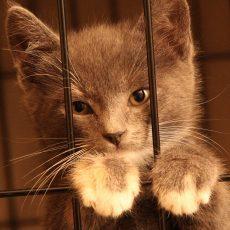 Ēnu ekonomika un dzīvnieku labturības prasību ignorance vai godprātīga rīcība?