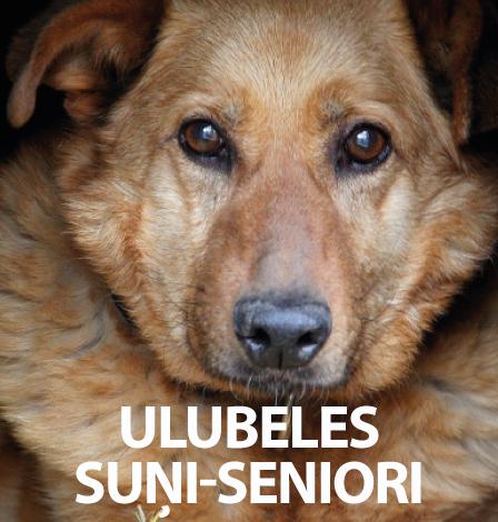 suni-seniori