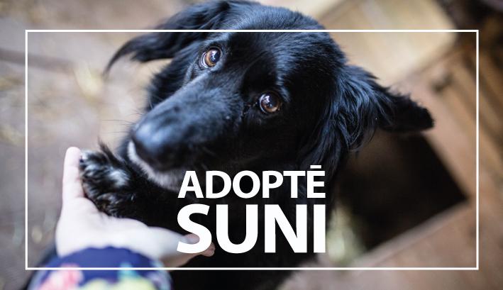 adopte_suni_mala