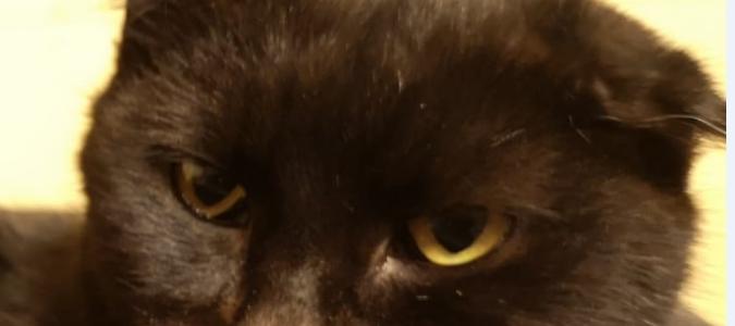 Kaķu omiņas Isīdas stāsts ! Sirds siltumu 100 opīšiem !