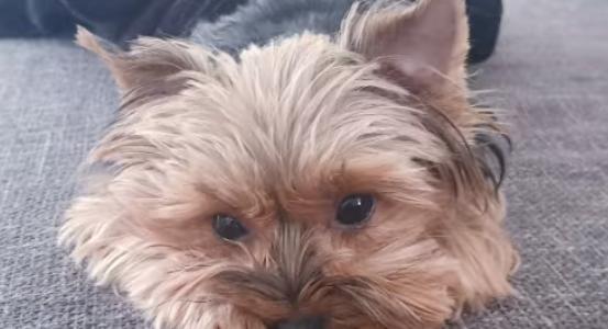 Kad pietiek ar vienu skatienu, lai saprastu – jā šis ir mūsu suns!