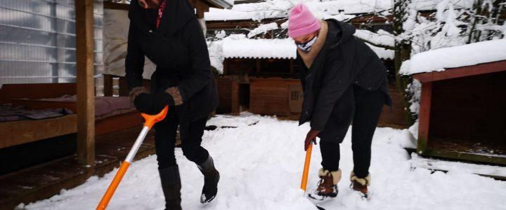 Paldies čaklajiem sniega tīrītājiem!