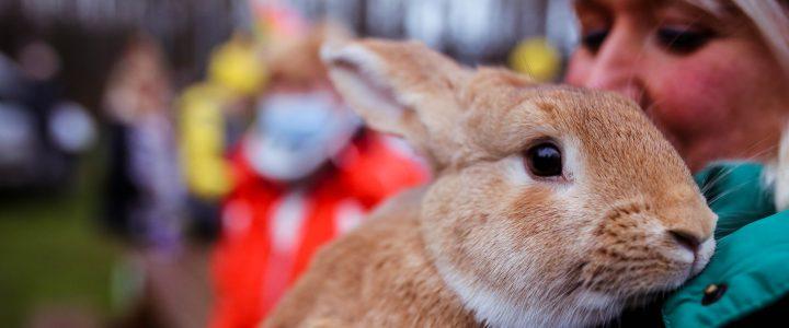 """""""Nākotnes Atbalsta fonds"""" uzsāk sadarbību ar dzīvnieku patversmi """"Ulubele"""""""