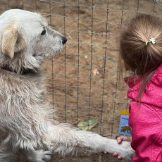 4.oktobris – Starptautiskā dzīvnieku aizsardzības diena